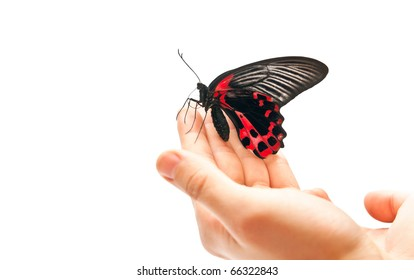 Black and red butterfly on man's hand. Studio shot