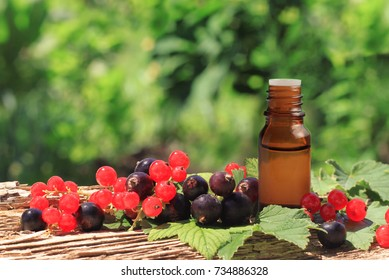 Black red currant seed oil. Fresh aromatic berries with dropper bottle berry extract on wooden plank close-up, green garden background.
