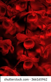 Black and red orchids background
