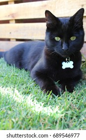 Black Resting in the Garden