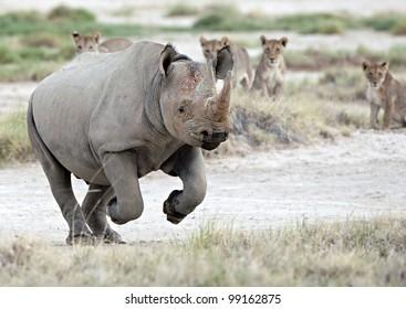 Black Rhino Escape