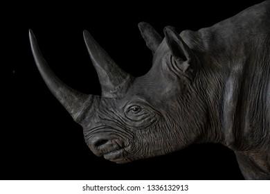 Black Rhino portrait