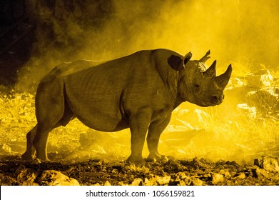 black rhino standing proud in a cloud of dust that is lit up with a yellow flood light at a waterhole in Etosha National Park, Namibia.