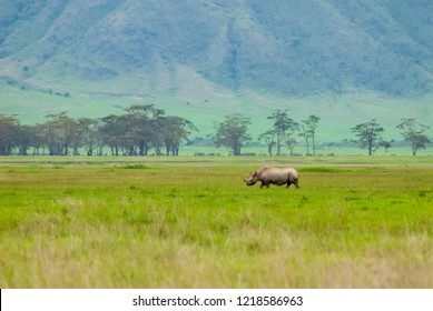 Black rhinoceros (Diceros bicornis) in Ngorongoro Conservation Area, Tanzania