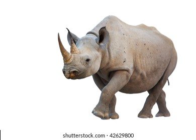 Rhino Black and White Images, Stock Photos & Vectors