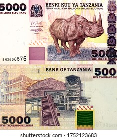 Black Rhinoceros Portrait from Tanzania 5000 Shillings 2003 Banknotes. An Old paper banknote, vintage retro. Famous ancient Banknotes. Collection.