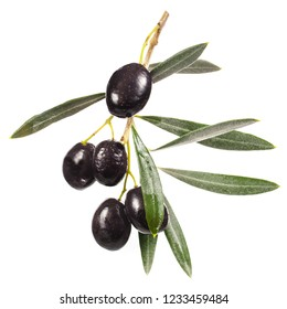 black ripe olives on a branch with leaves isolated on white background