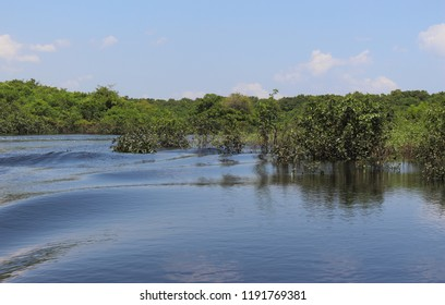 Black river in Amazonas, Brazil. A giant river it seems a sea. Used to fish, navigate, play, feed local people who live on the coastline. The river has black colour due to algae decomposition