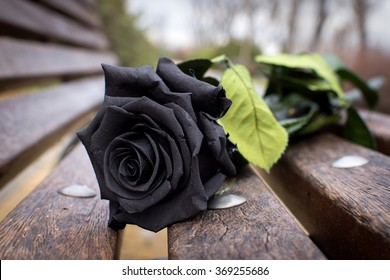 Black Rose Images Stock Photos Vectors Shutterstock
