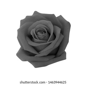 Black rose isolated on white background, clipping path and - soft focus.