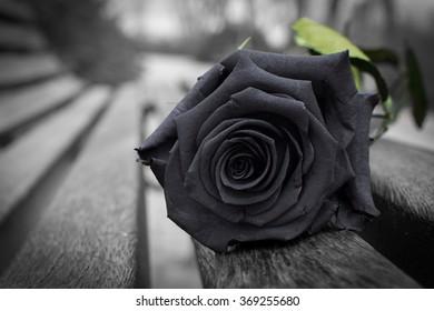Black Rose, mental illness, depression