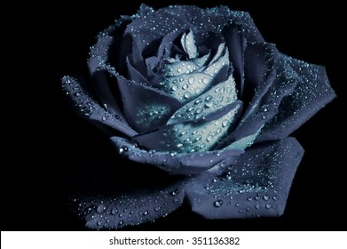 black rose on a black background with drops on the petals