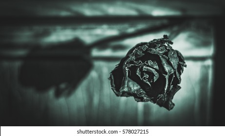 Black rose. Symbol of grief, pain and depression. Vintage background. Overcome depression. Fight and do not give up! Eaten by worms.