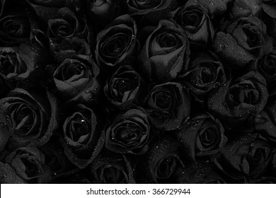 Black roses background with water drops