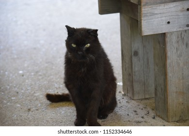 Black sad cat