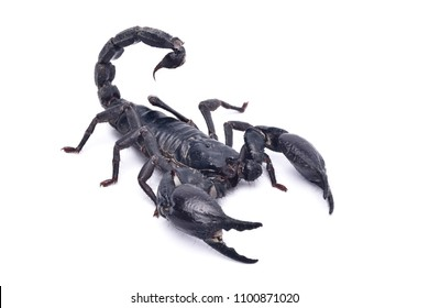 scorpion freefight