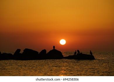 black sea sunrise with birds