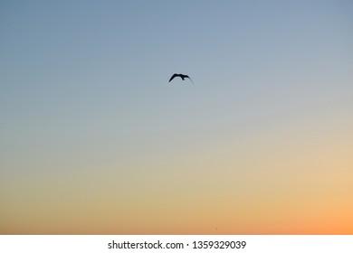 Black Sea, Sunrise, Navodari, Romania, August 2018