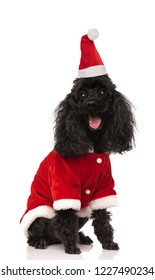 black seated santa poodle panting and looking excited on white background