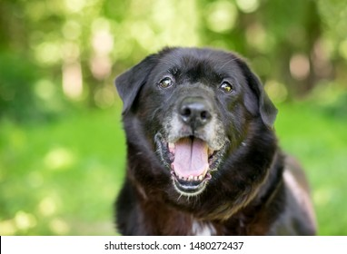 A black senior mixed breed dog outdoors with a happy expression