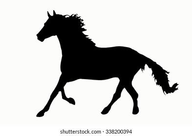 Black shadow of smart horse