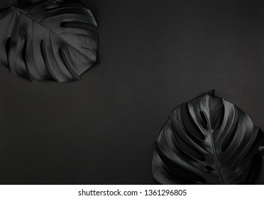 Black shiny monstera leaves creative layout on dark paper background flatlay. Unusual artistic luxurious cosmetics concept.
