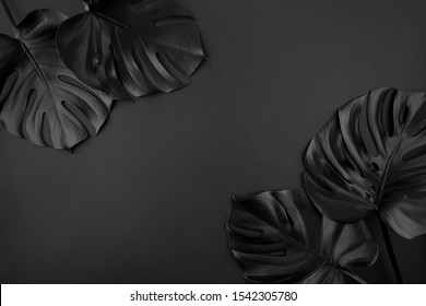 Black shiny monstera leaves creative layout border frame dark paper background flatlay. Room for text, copy, lettering. Black Friday poster template. Unusual artistic luxurious cosmetics concept.
