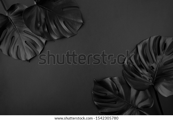 black-shiny-monstera-leaves-creative-600
