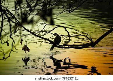black silhouette of a bird reflected on water during sunset
