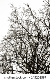 Black silhouette branches of tree on white isolated