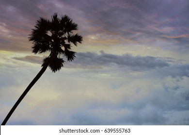 Black silhouette of a palm tree in the evening.