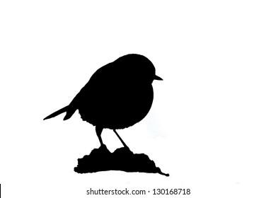 black silhouette of robin bird specie Erithacus rubecula in white background