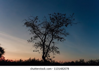Black silhouette of a tree at sunset