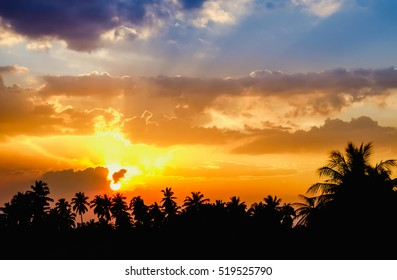black silhouettes of coconut trees in the city center on colorful sunset sky