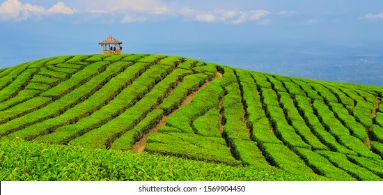 Black silhouettes of people chilling in gazebo on hill top with scenic view. Traditional highland tea plantation in mountains. Popular place, travel destination at family vacation tour in Jawa island.