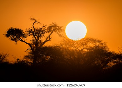 black silhoute of african trees in front of a sunset