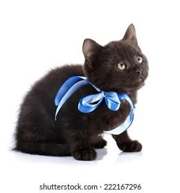 Black small kitten with a blue tape.  Fluffy black kitten. Kitten on a white background. Small predator. Black kitty. Small cat.