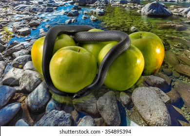Black snake with green apples on stone ground background. concept: temptation, poison apples, poison earth, pollution and contamination, groundwater pollution, water pollution.
