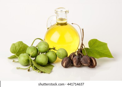 Black Soap, Physic nut, Purging nut, Barbados nut, Kuikui pake, Pignon d'inde (Jatropha curcas L.), potentially leading to extraction and production of biodiesel.