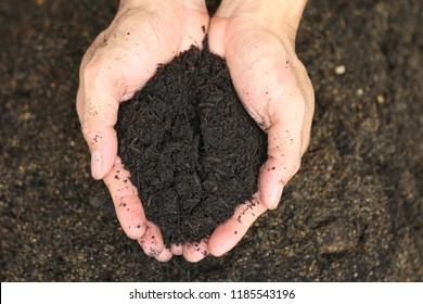 Black soil in hand of man in earth and agriculture concept.