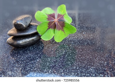 Black spa stones and four leaf clover isolated on gray background.
