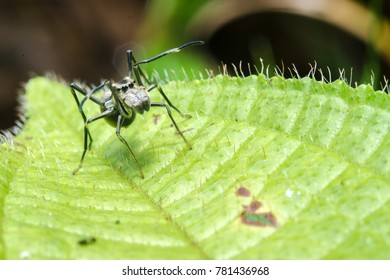 Black spider on a green leaf