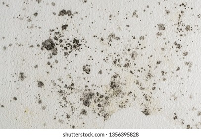 Black spots of toxic mold and fungus bacteria growing on a white wall. Concept of condensation, damp, water infiltration, moisture, dust and respiratory problems.