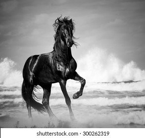 black stallion by the seaside in the wild