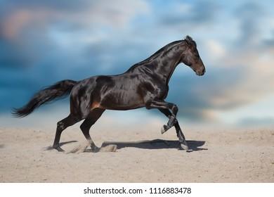 Black stallion with long mane run in desert dust against  blue sky