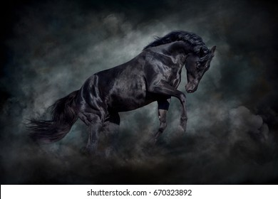 Black stallion in motion against dark  dust clubs