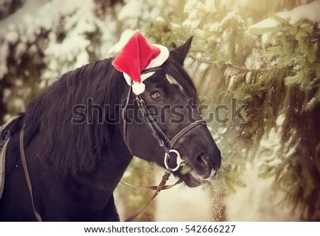 Black Stallion Red Santa Claus Hat Stock Photo (Edit Now) 542666227 ... 91744d8416ee