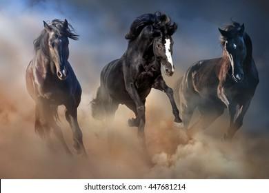 Black stallions run gallop in desert dust against dramatic sky