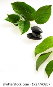 black stone and green leaf branch plant on a white background. Spa Concept