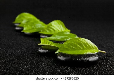 black stone with green leaves in drops of water isolated on a black background